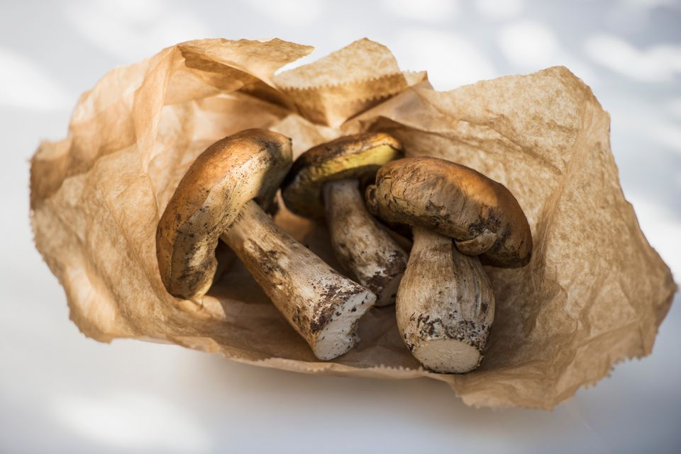 Porcini Mushrooms: What are their Benefits and How to Choose Good Ones