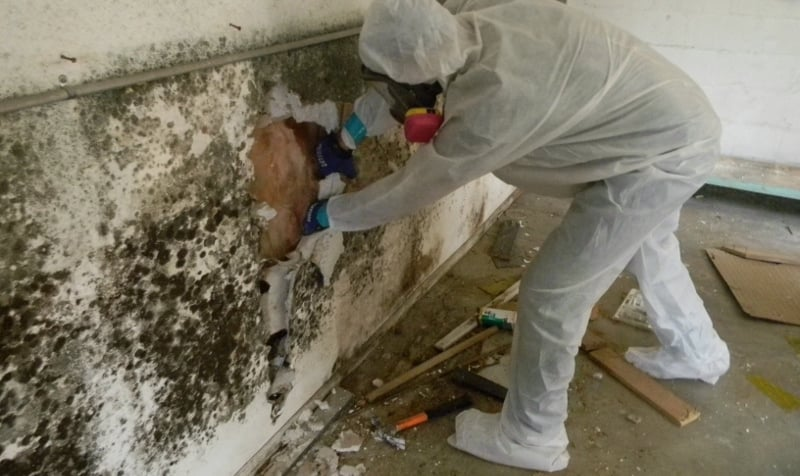 Mold Remediation 101: Finding the Right Service in Chicago!